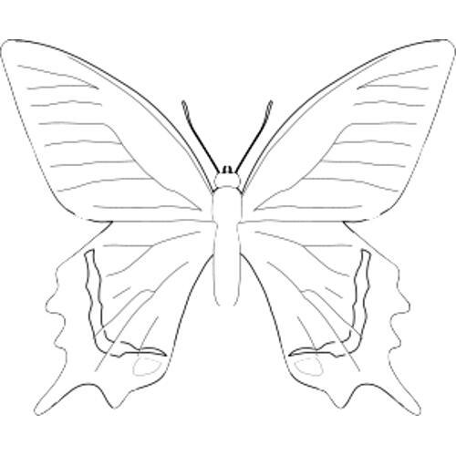 Kolorowanki Motyle Kolorowanka Do Wydruku Darmowe