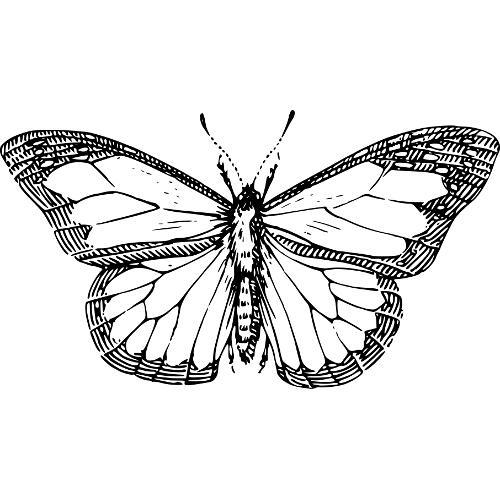 Kolorowanki Motyl Kolorowanka Do Wydruku Darmowe
