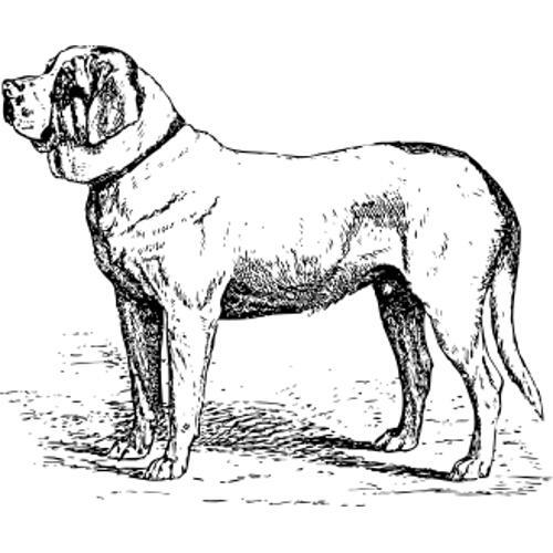 Kolorowanki Pies Bernardyn Kolorowanka Do Wydruku Darmowe