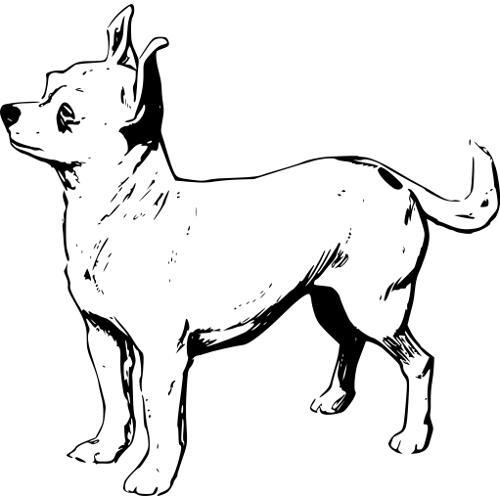 Kolorowanki Pies Chihuahua Kolorowanka Do Wydruku Darmowe