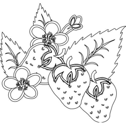 Kolorowanki Rosliny Truskawki Kolorowanka Do Wydruku Darmowe
