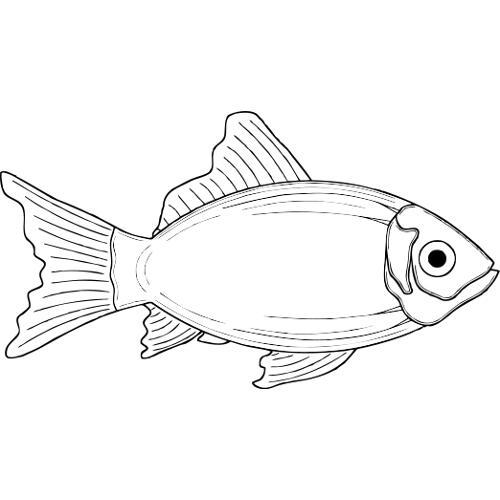 Kolorowanki Ryba 13 Kolorowanka Do Wydruku Darmowe