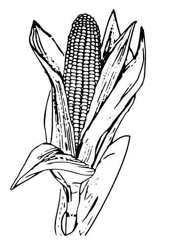 maize field clip art