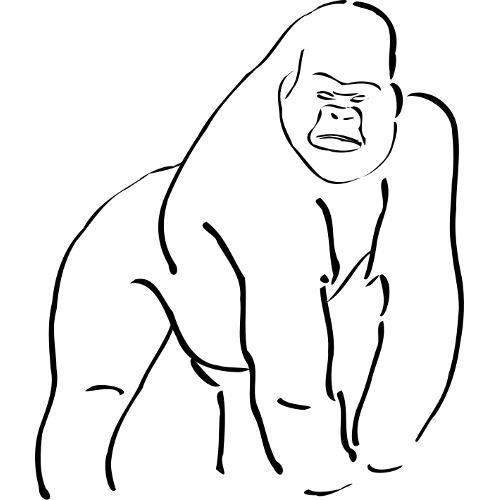 Gorilla Face Line Drawing : Kolorowanki zwierzęta egzotyczne goryl kolorowanka do